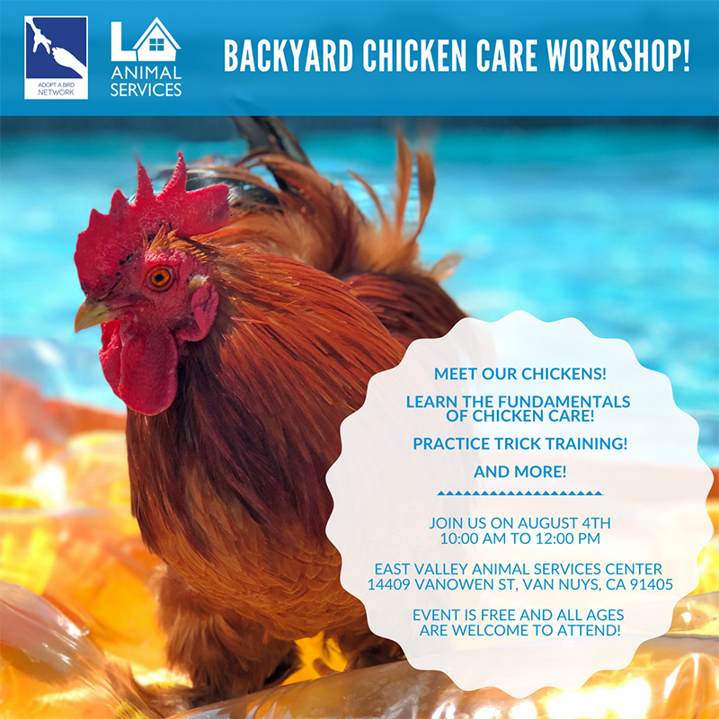 Backyard Chicken Care Workshop image preview