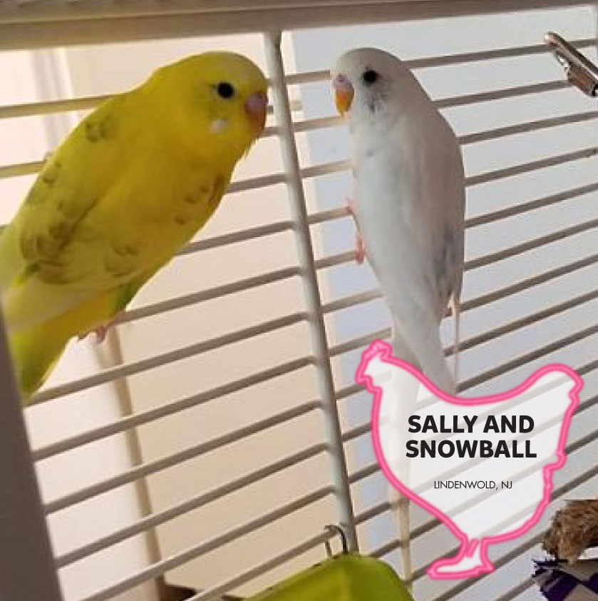 Sally and Snowball photo