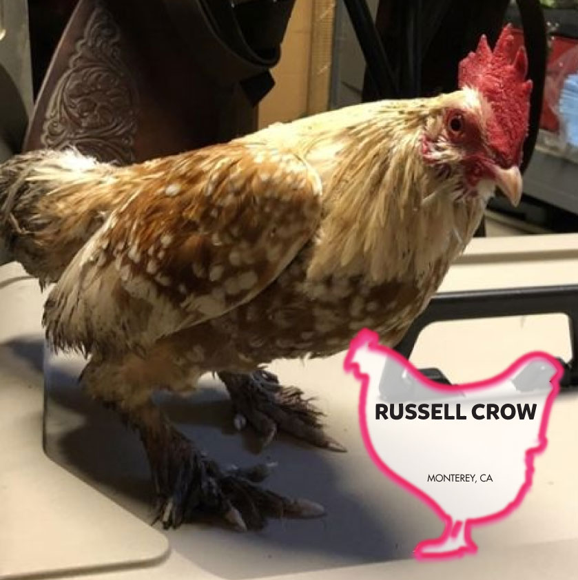 Russell Crow photo