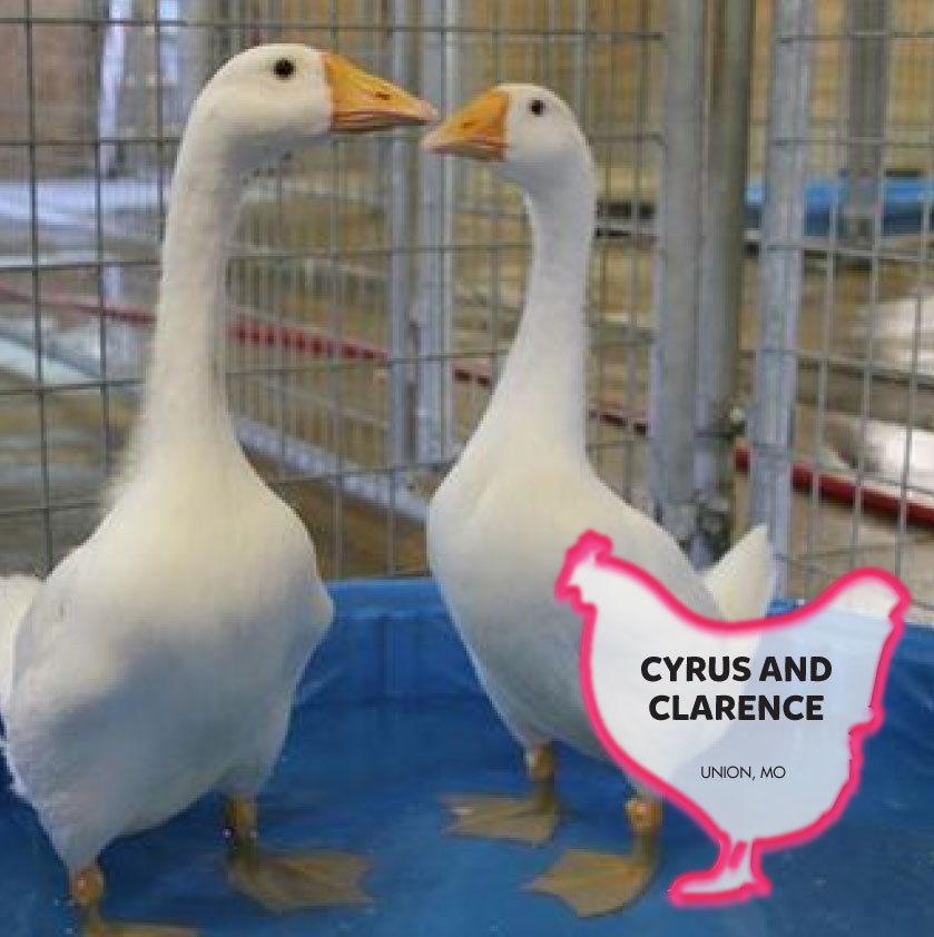 Clarence and Cyrus photo