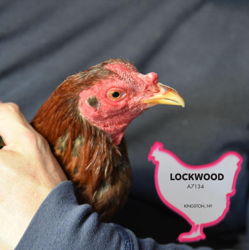 Lockwood photo