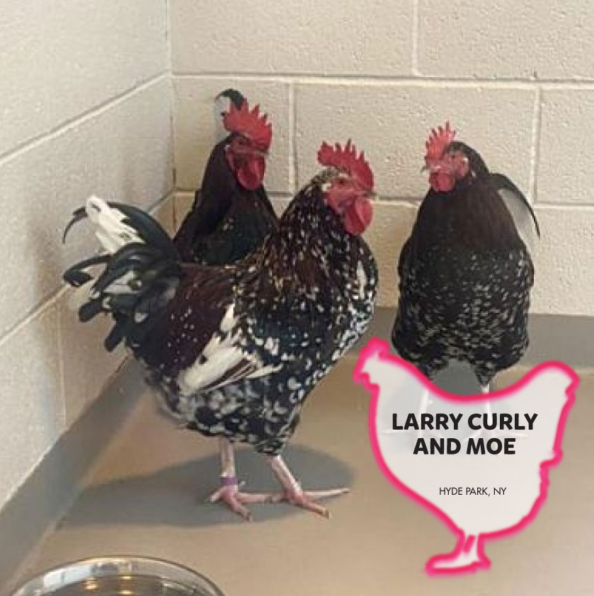 Larry, Curly and Moe photo