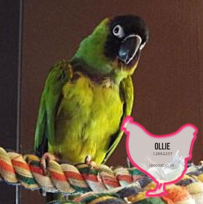 Ollie photo