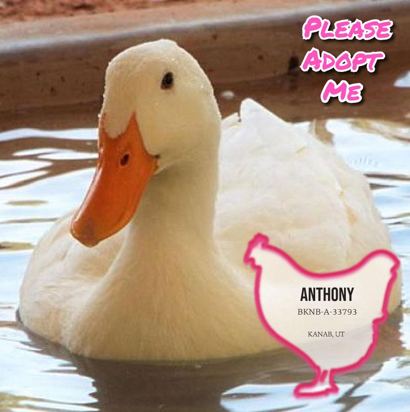 Anthony photo